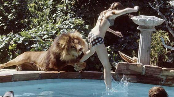 Perturbing cult movies roar-w636-h600