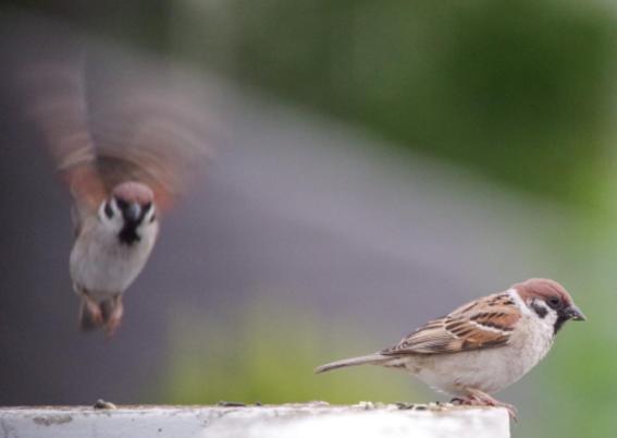 conceptos basicos de optica aves