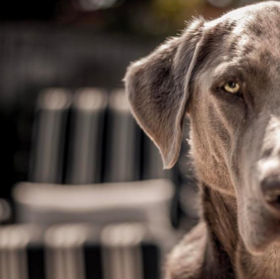 conceptos basicos de optica perro