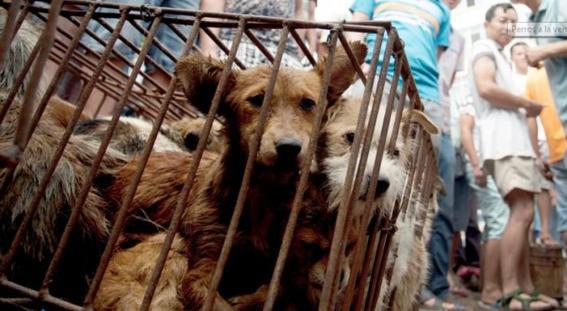 Taiwán prohíbe el consumo de perros