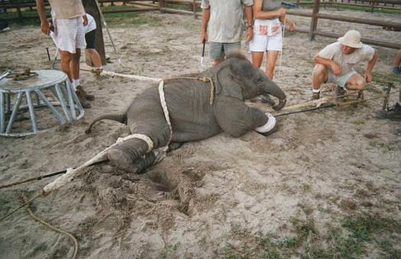 elefantes golpes-w636-h600