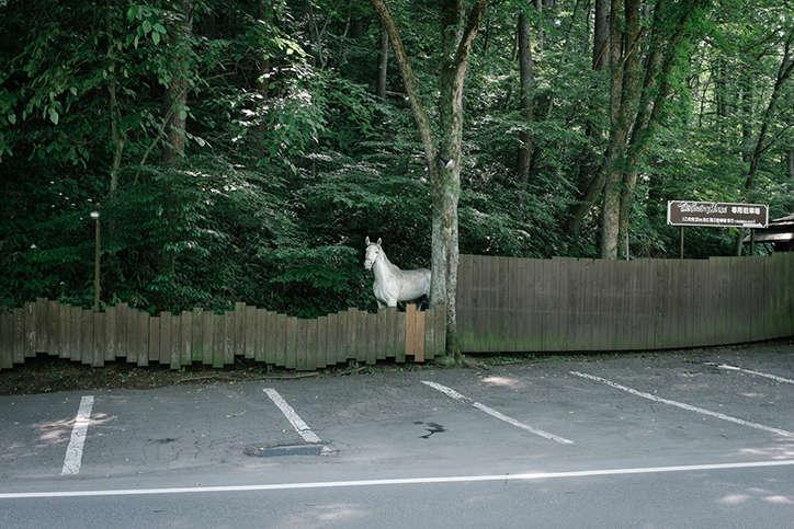 fotos de yota yoshida horse