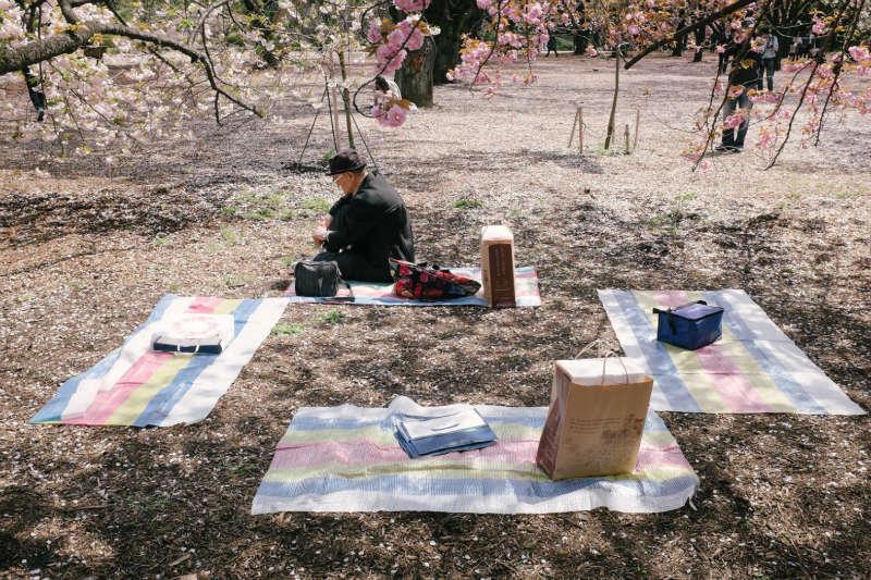 fotos de yota yoshida picnic