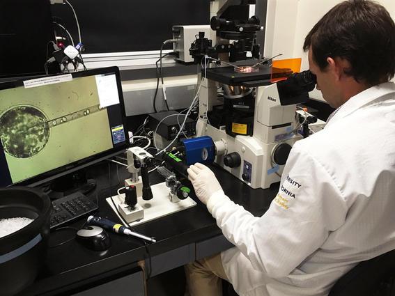 historia del microscopio laboratorio