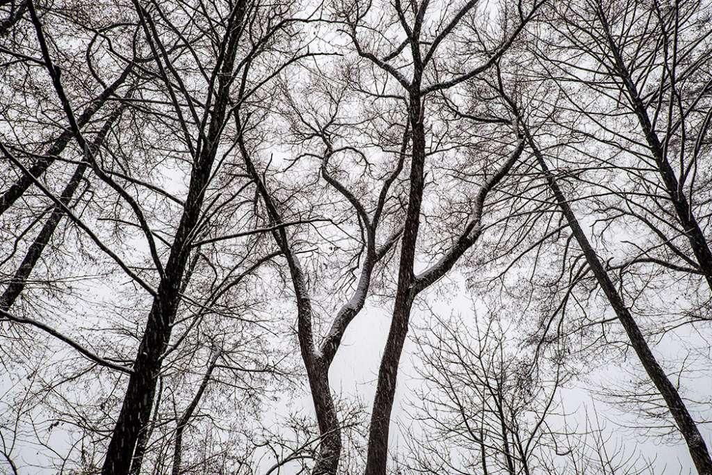 troncos Esthaem