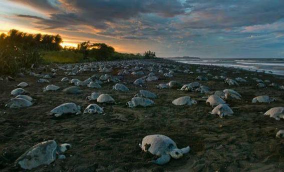 volunteer marine life conservation
