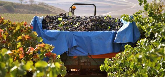 wine volunteer program france 3