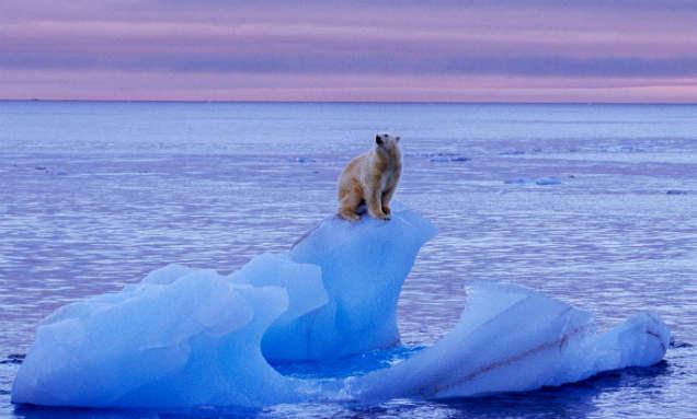 oso polar calentamiento global