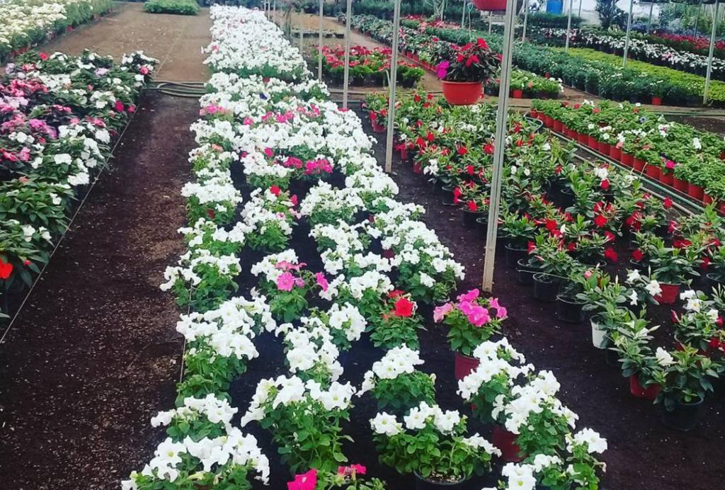 8 razones por las que debes visitar atlixco si vives en la for Viveros de plantas en atlixco