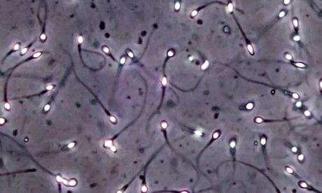 curiosidades sobre el semen y los espermatozoides 2