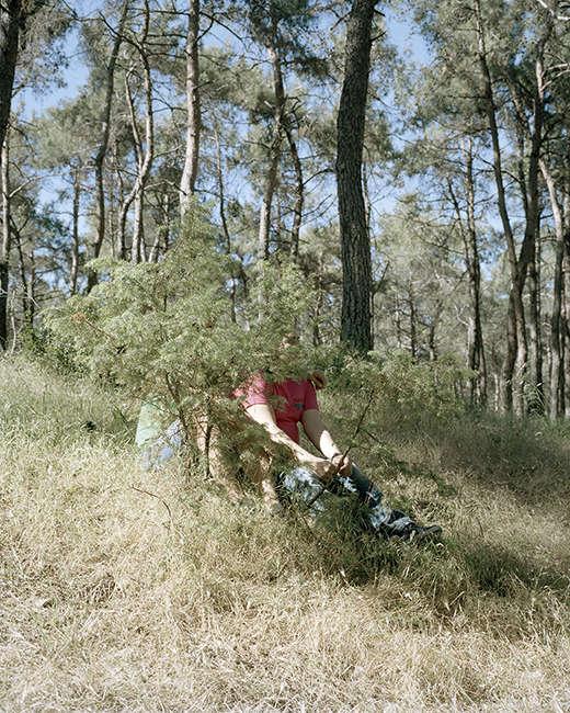fotografias de laurence rasti bosque