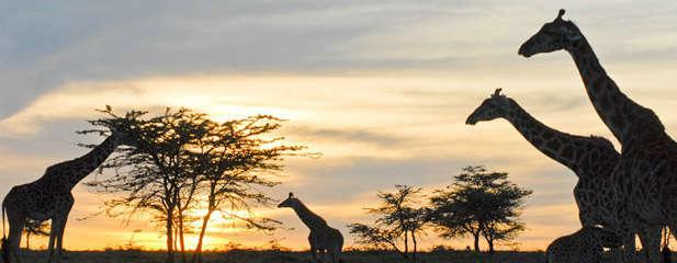 lugares a los que debes viajar en tu vida kenia-w636-h600