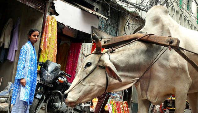 lugares a los que debes viajar en tu vida nueva delhi-w636-h600