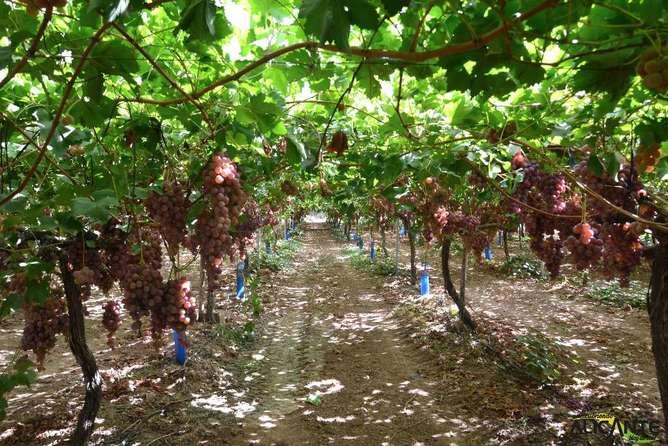 lugares cerca de la ciudad de mexico viñedos