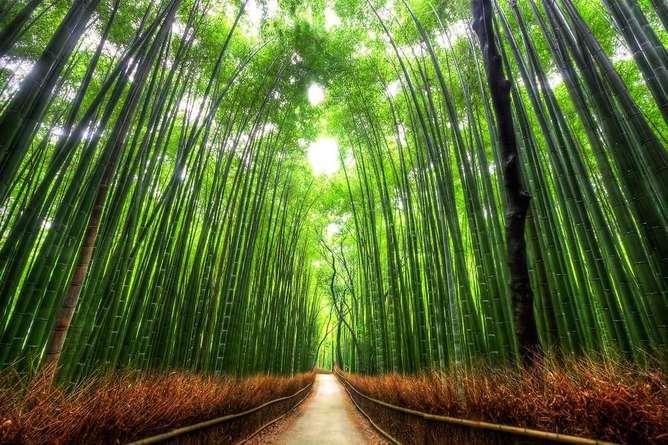 lugares mas surrealistas del mundo bosque d ebambú