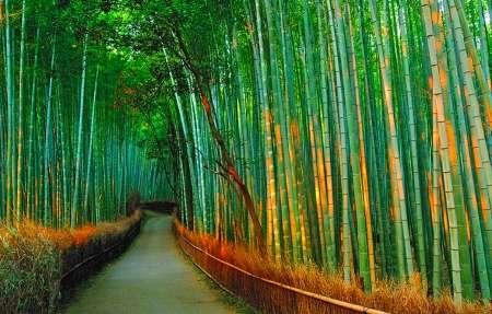 lugares mas surrealistas del mundo bosque de bambu