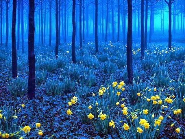 lugares mas surrealistas del mundo bosque negro