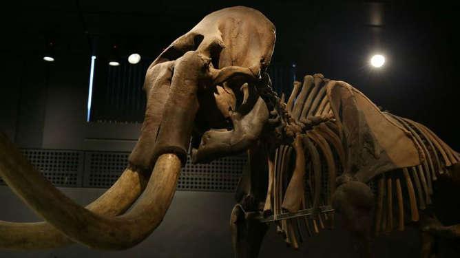 mamut esqueleto