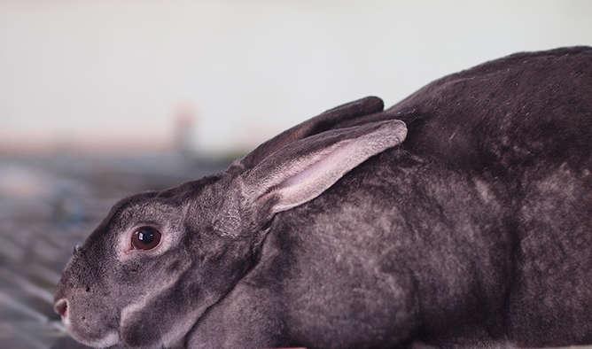 peluche hecho con piel de conejo