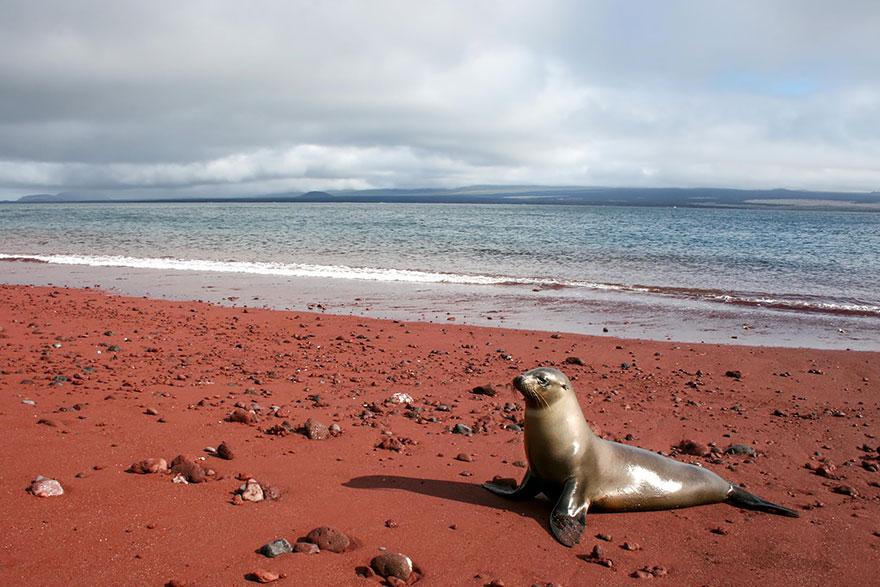 playa de arena roja