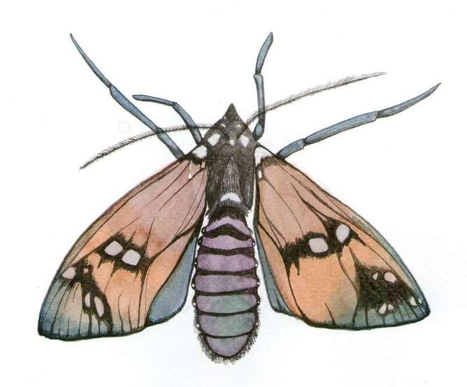 sharon barcs - mariposa- ilustracion