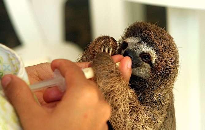 sloth voluntariados en italia