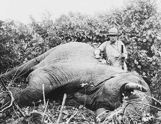 theodore roosevelt safari