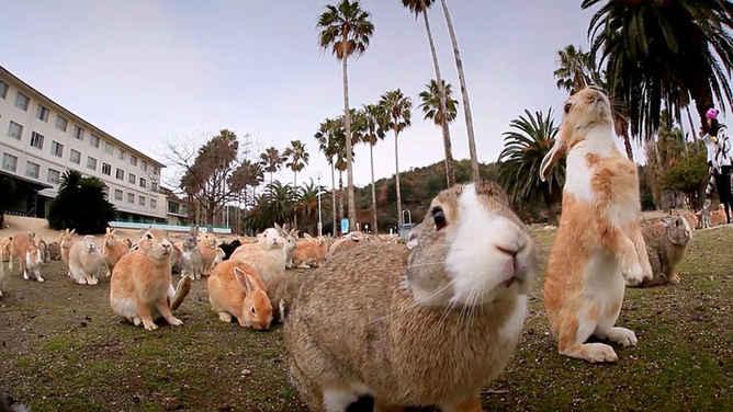lugares mas extraños de japon conejo
