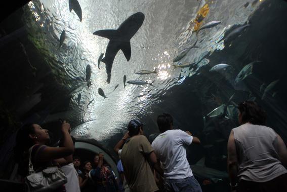 acuarios en mexico