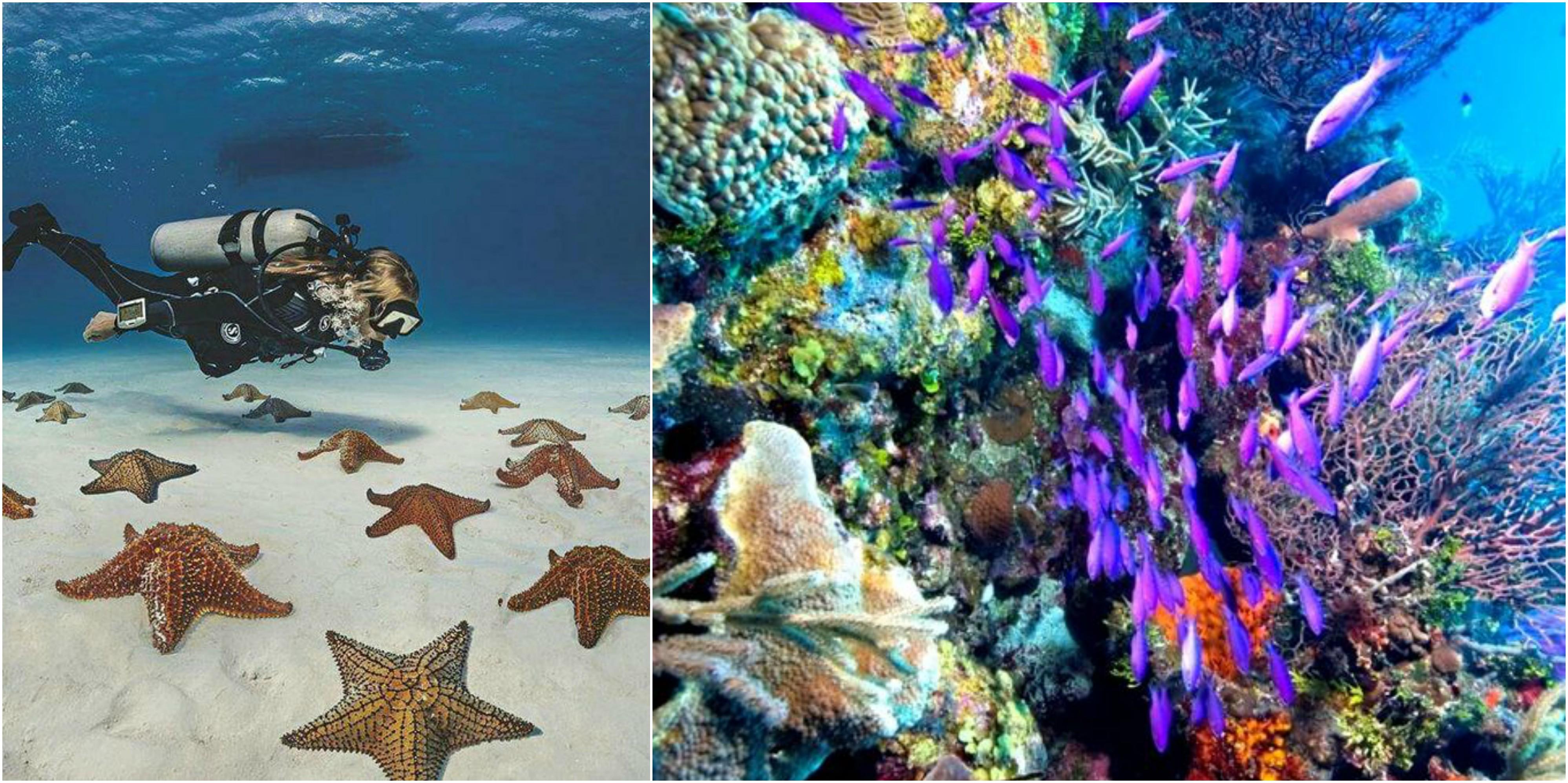arrecifecancun