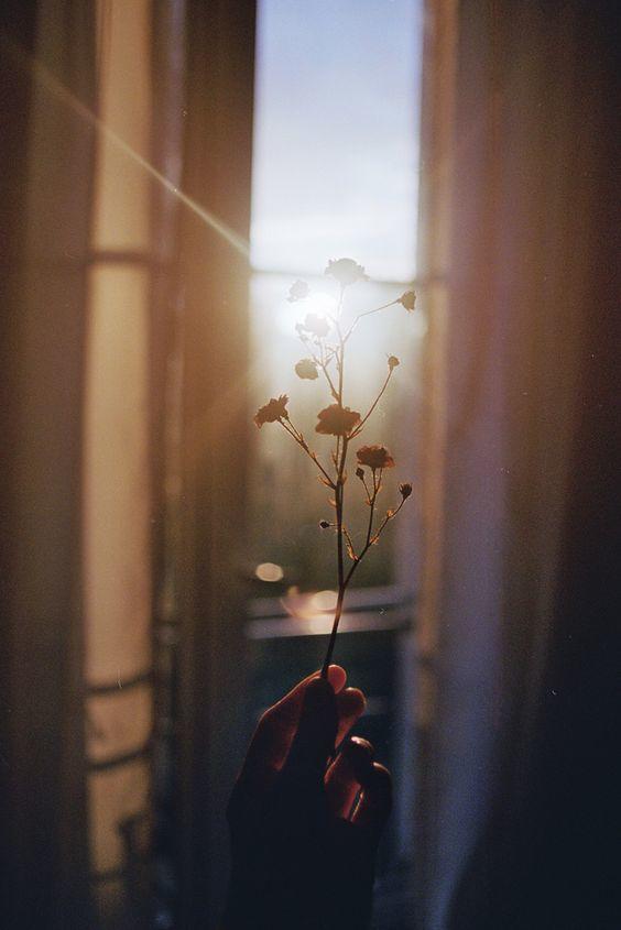 como tomar fotos con luz natural ventana