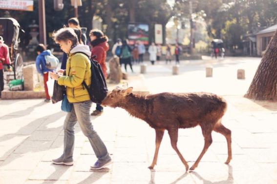convivencia entre animales salvajes y humanos