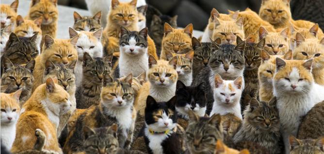 lugares mas extraños de japon gatos