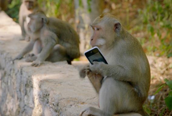 mafia de macacos