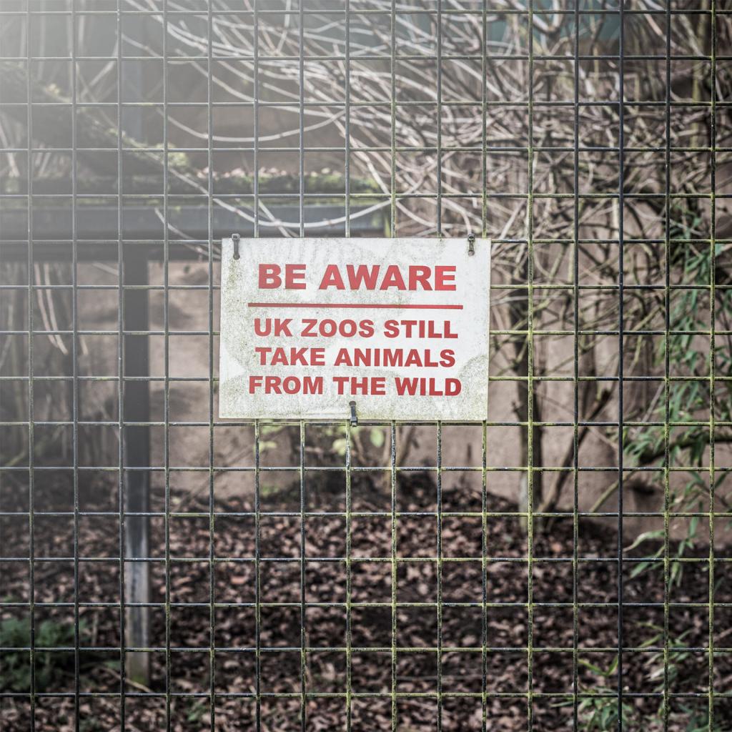 sufrimiento de animales en zoologicos advertencia