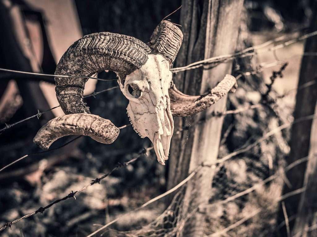 sufrimiento de animales en zoologicos cadaver