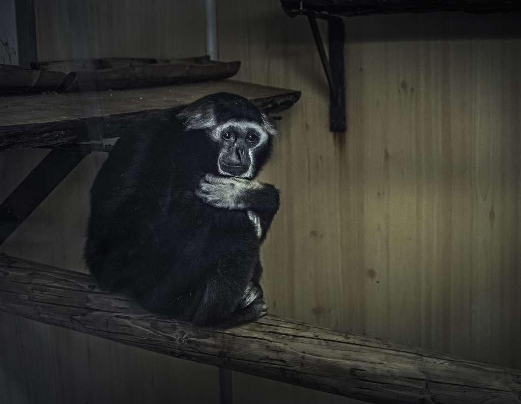 sufrimiento de animales en zoologicos rama