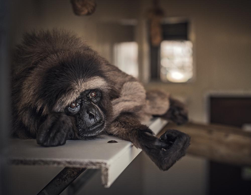 sufrimiento de animales en zoologicos sad