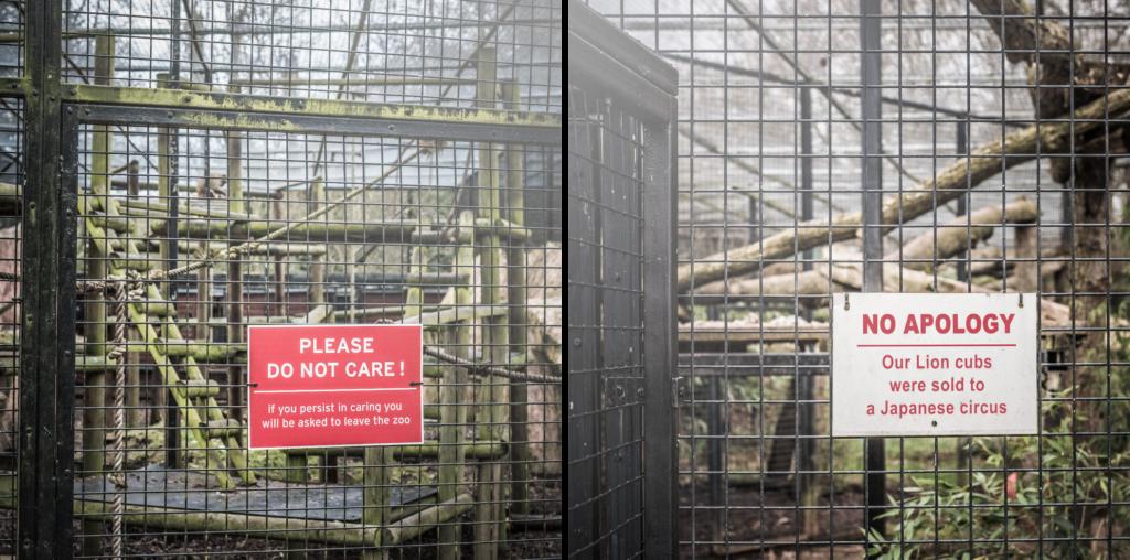 sufrimiento de animales en zoologicos warning