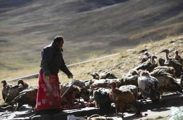 Tibetan sky burial feeding-w600-h600