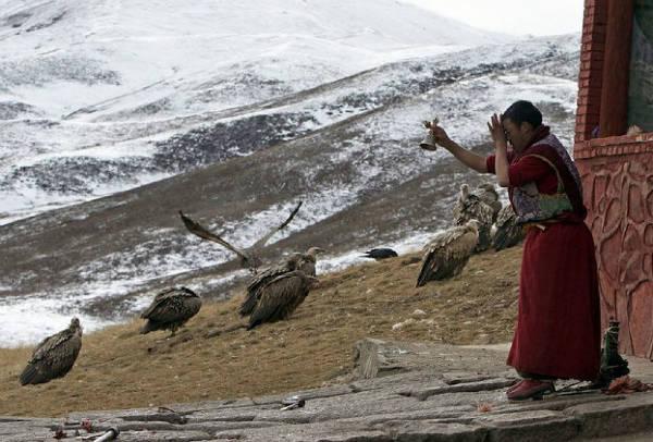 Tibetan sky burial waiting-w600-h600