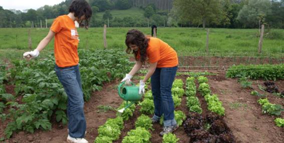 tapete para cultivar vegetales con orina 2