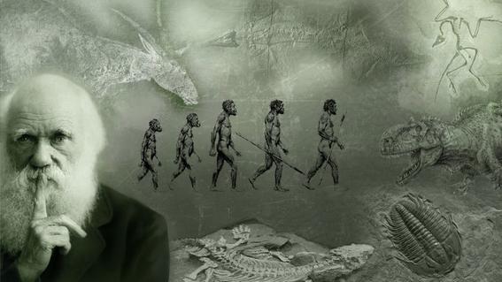 preguntas necesarias sobre la teoria de la evolucion