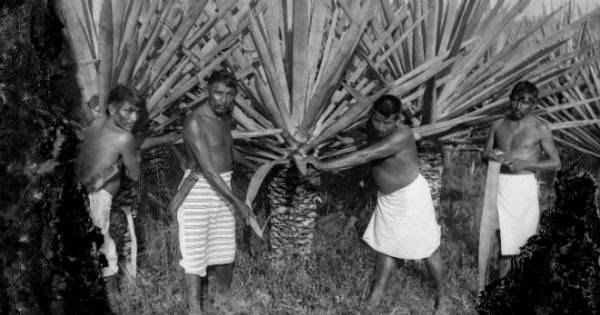 El genocidio indígena del porfiriato que no te enseñaron en la escuela
