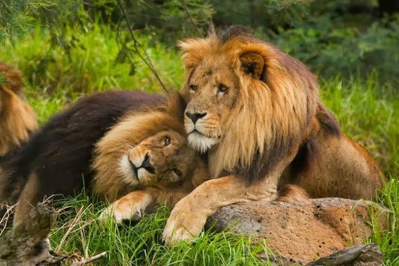 homosexualidad en animales 1