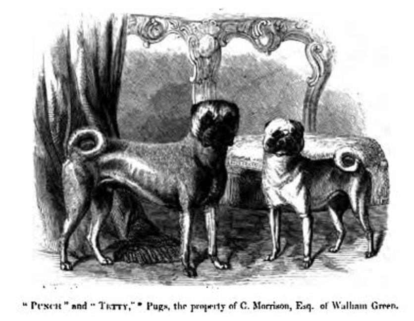 La Orden del Pug: una sociedad secreta dentro de los masones 2