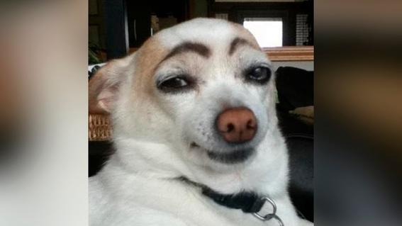 perros reaccionan a las miradas 1