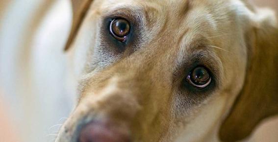 perros reaccionan a las miradas 2