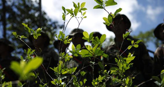 campesinos de coca son asesinados en colombia 3