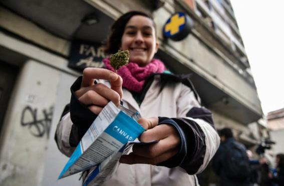 uruguay se queda sin marihuana por falta de abasto 1
